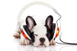 Psí audioknihy