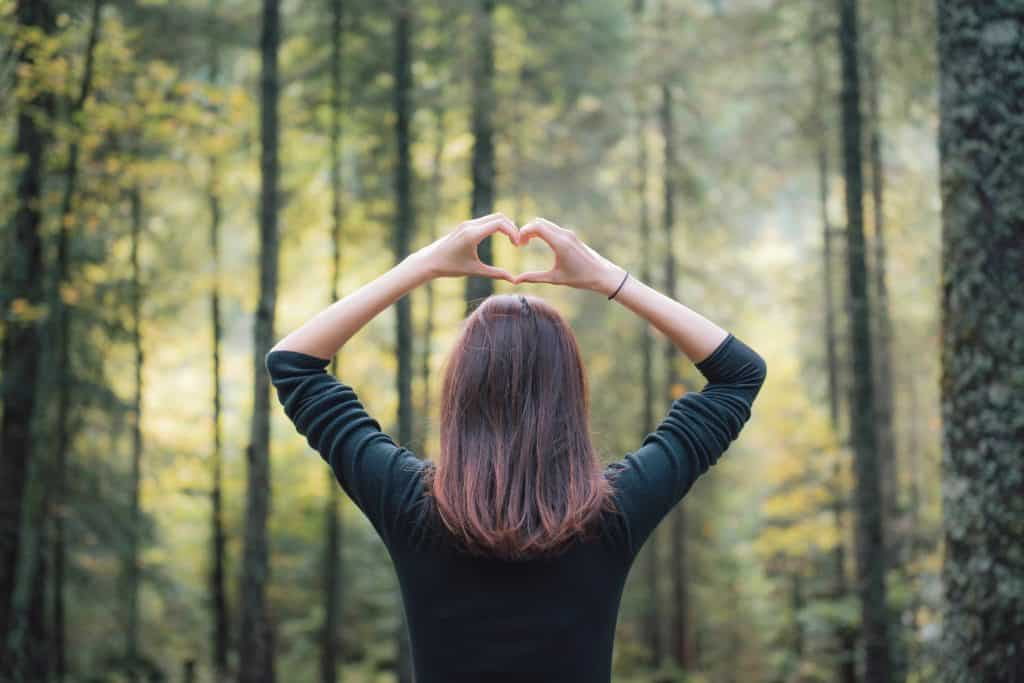 Proč jsou pro nás lesy nenahraditelné?